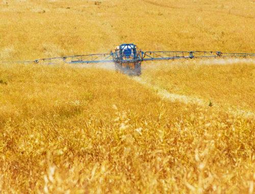 Traktor bringt Herbizid auf Getreidefeld aus